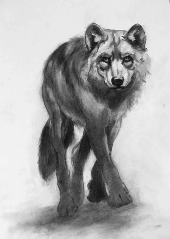 Wolf - 18 x 24 - Charcoal