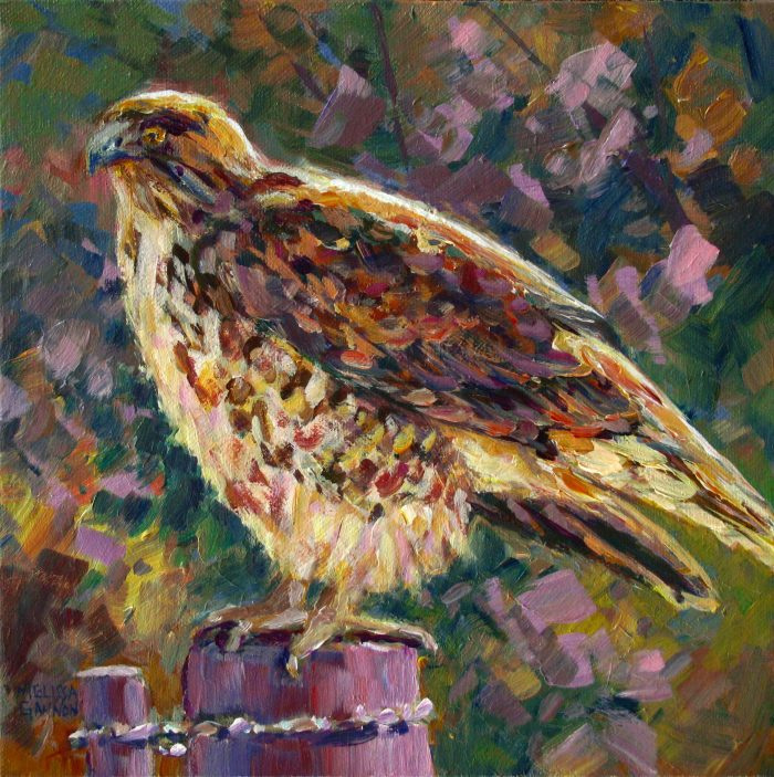 Country Hawk - 10 x 10 - Acrylic