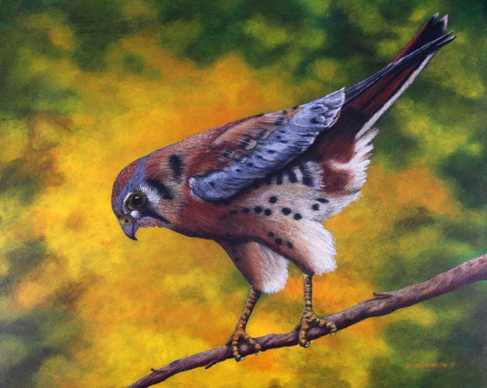 Good Morning-Kestral - 20 x 16 - Watercolor, Colored Pencil