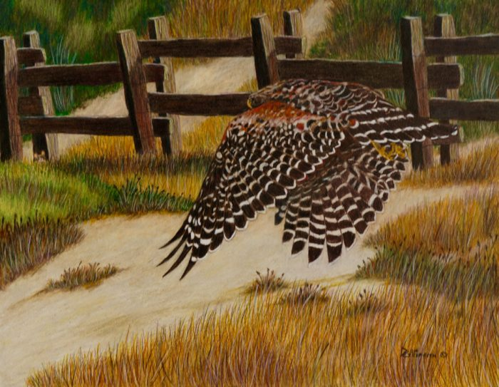 Run Mouse Run-Red Shoulder Hawk - 16 x 12 - Watercolor, Colored Pencil