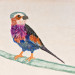 Lilac Brested Roller - 8 x 10 - Water (beer) color thumbnail