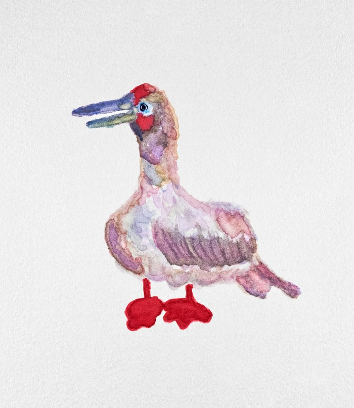 Red-footed Booby - 8 x 10 - Water (beer) color