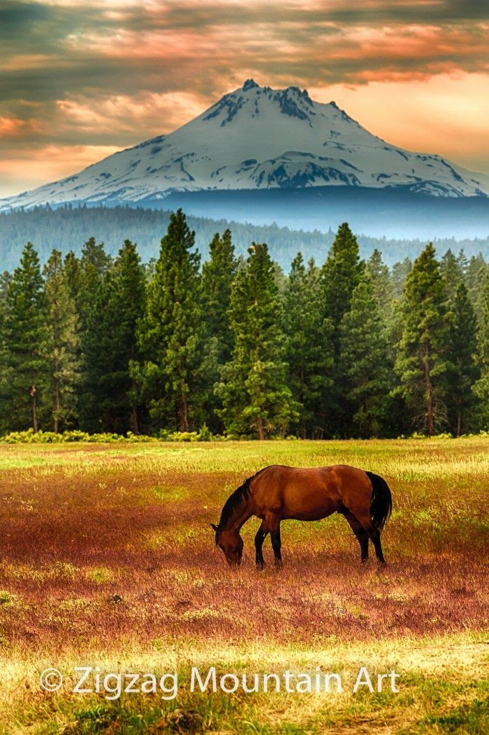 Horse at Mt Jefferson - 24 x 32 - Photography