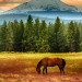 Horse at Mt Jefferson - 24 x 32 - Photography thumbnail