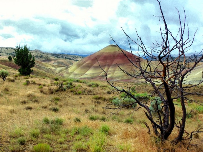 Oregon Painted Hills with Tree - 18 x 12 - Photography