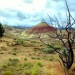 Oregon Painted Hills with Tree - 18 x 12 - Photography thumbnail