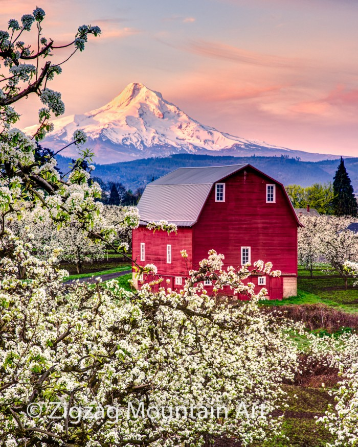 Red Barn in the Orchard - 24 x 32 - Photography