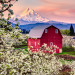 Red Barn in the Orchard - 24 x 32 - Photography thumbnail