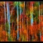Aspen Autumn - 18 x 24 - Photography