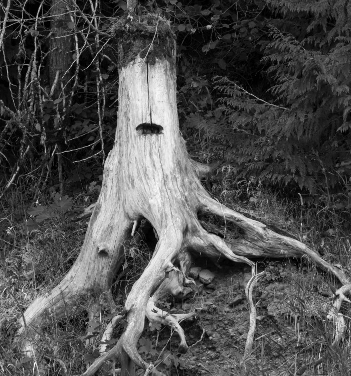 Stump Portrait in Black and White - 8 x 10 - Photography