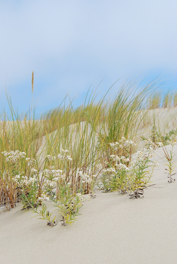 Beach Grass, Florence, OR - 16 x 20 - Photography