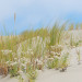 Beach Grass, Florence, OR - 16 x 20 - Photography thumbnail
