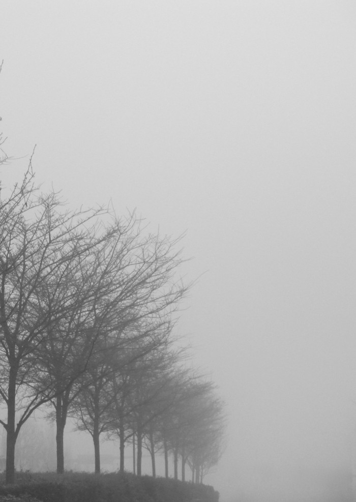 Tree Line in the Fog  - 30 x 40 - Photography