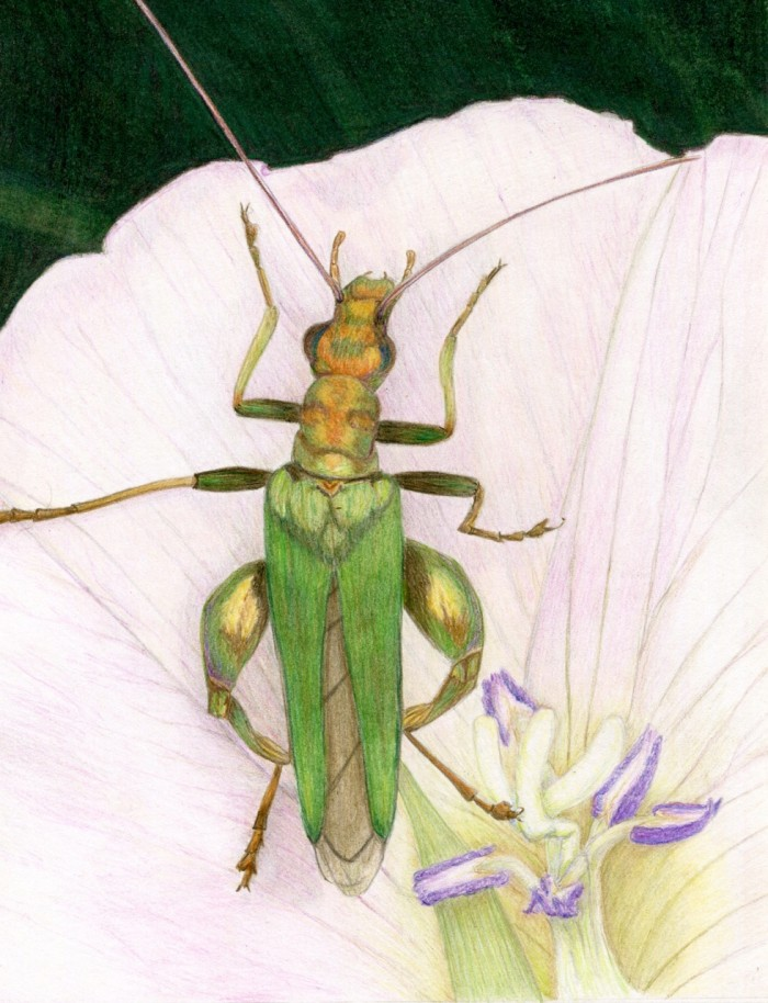 Green Visitor - 8 x 10 - Colored Pencil