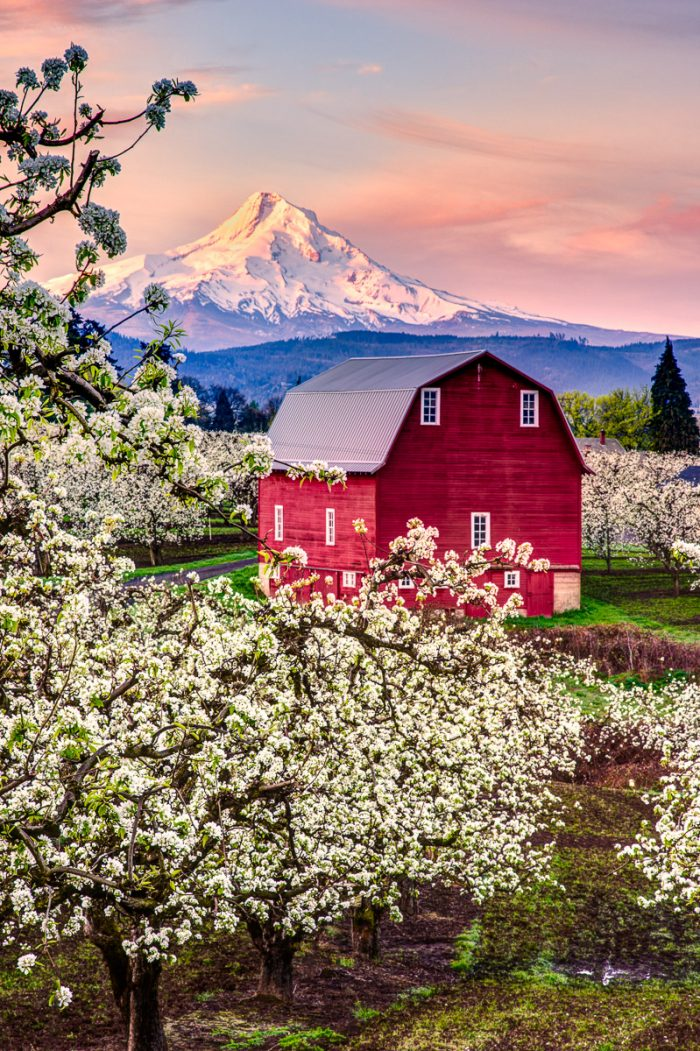 Red Barn in the Orchard - 16 x 24 - Photography