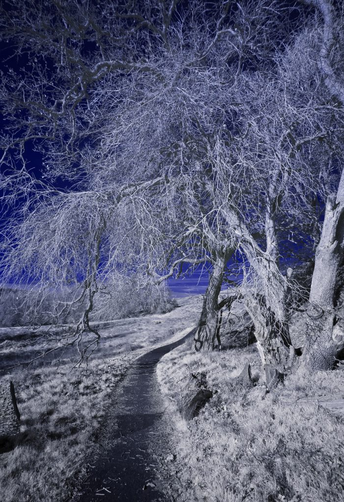 Winding Path - 24 x 18 - Infra Red Photography