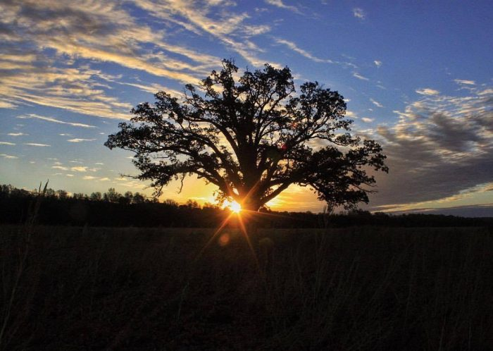 Sunrise Over the Big Tree - Photograph