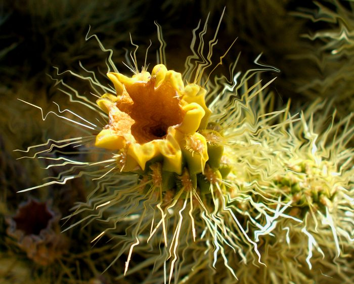 Cholla - 28x24 - Photograph