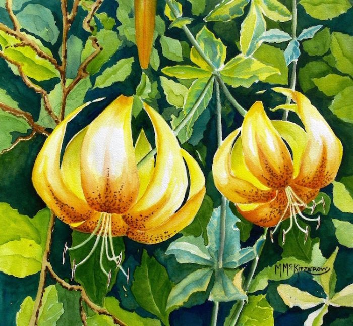 Columbia River Tiger Lilies - 20x20 - Watercolor