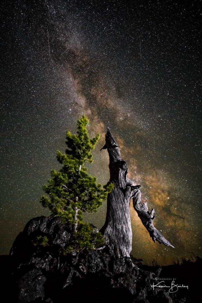 Dwarf Tree Under The Milky Way - Photography
