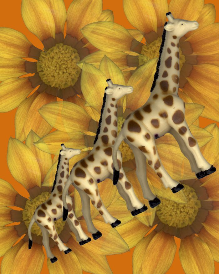 Giraffes on Parade - 11x14x1 - Photocollage