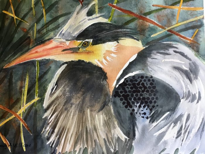 Great Blue Heron - 16x12 - Transparent Watercolor