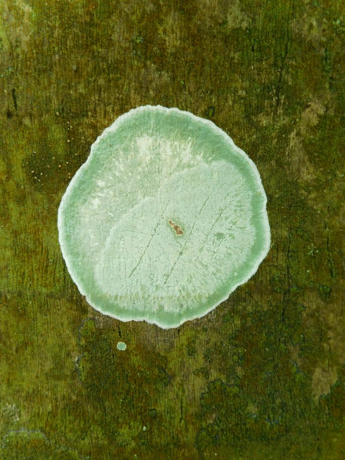 Lichen on Palm Bark - 24x28 - Photograph