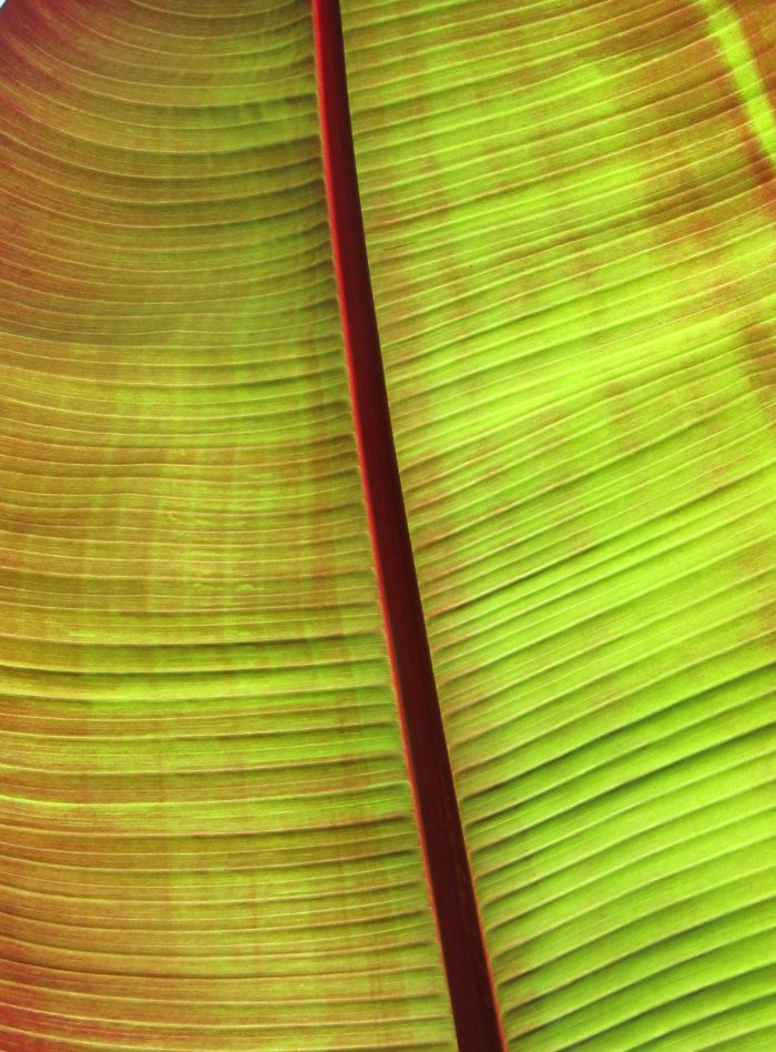 Palm Leaf - 24x28 - Photograph