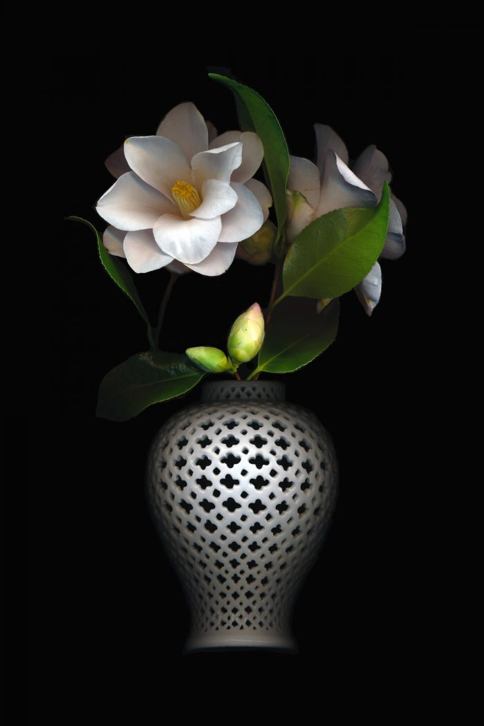 Stephen Weislogel - Camellias and Pierced Vase - 6x4