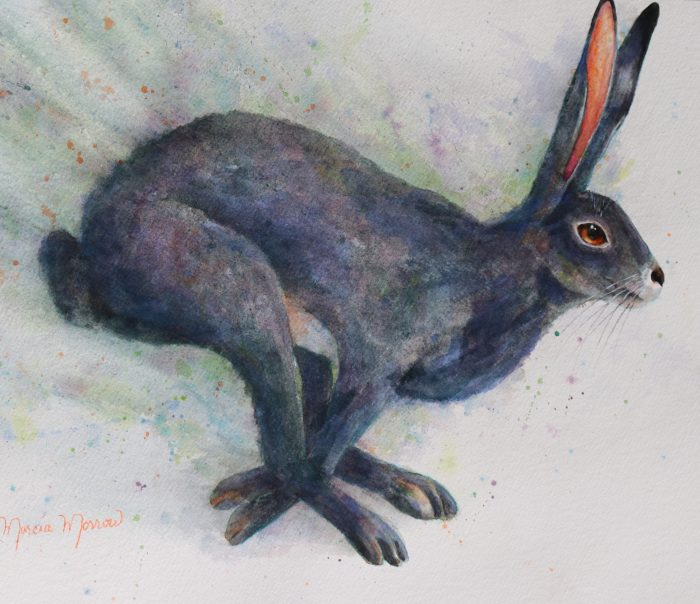 Wild Hare - 19x25x1 - Watercolor