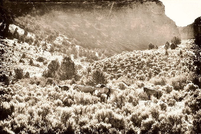 Wild Horse Canyon - 16x20x2 - Photography